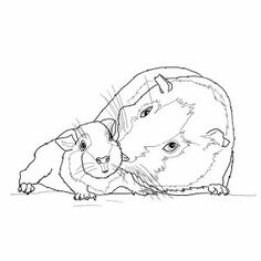 Guinea pig in a box coloring page Tennie Pinterest Box and Craft