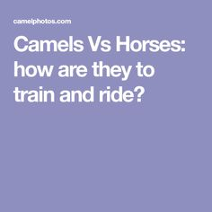 Camels Vs Horses: how are they to train and ride?
