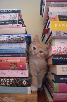 books and orange kittens...two of my weaknesses all at once