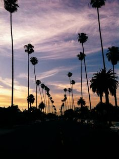 Sunsets & palm trees, yes please.