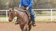 Teach your horse the basics of flexing vertically and softening to the bit. Horseback Riding Tips, Horse Riding Tips, Horse Training, Training Tips, Ranch Riding, Horse Exercises, Western Pleasure, Horse Care, Horse Head