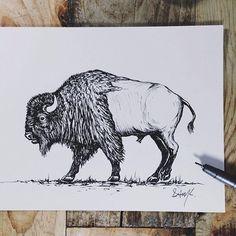 Bison illustration                                                                                                                                                                                 More
