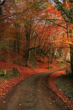 Autumn in Shropshire, England