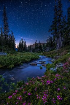 Stars Above by David Hodge: https://www.facebook.com/ReedTimmerTVN/photos/a.169775739168.113995.166805519168/10153135960844169/?type=1&theater | Photo taken in Olympic National Park