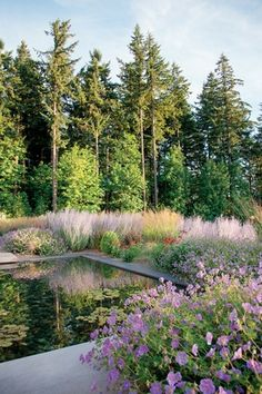Geranium 'Rozanne' and Russian sage are part of the garden.