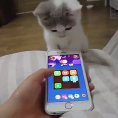 Funny Categories Fuunyy She playing # funny Source by Jantoes Cute Baby Cats, Cute Little Animals, Cute Cats And Kittens, Cute Funny Animals, I Love Cats, Crazy Cats, Kittens Cutest, Cute Animal Videos, Funny Animal Pictures
