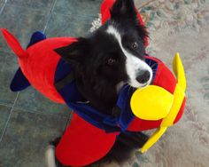 """""""Told you Mom...Red Bull gives you Wings"""" says Asha the border collie"""