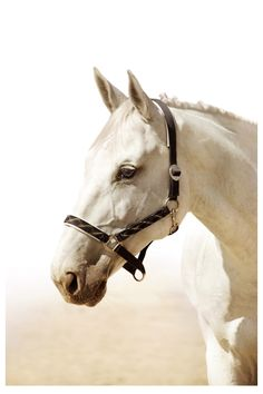 what is it about white horses?? they are the fantasy of life!