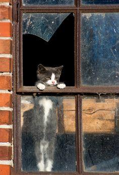 Looks like my curious little kitties :)