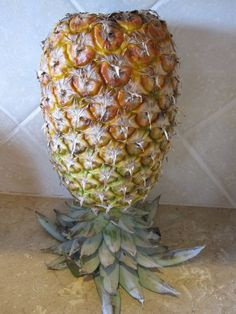 Did you know that if you turn a pineapple upside down (set it on it's leaves) that it will ripen more evenly and quickly?