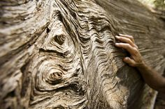 Unusual textural tree bark...