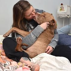 And Fifty, the two legged pitty who continues to give out kisses and love every second. | 33 Terrifyingly Adorable Pit Bulls