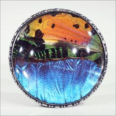 Vintage Morpho Butterfly Wing Picture Brooch in Sterling Silver
