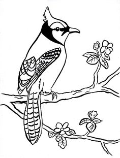 printable coloring pages of blue jays | Blue Jay Coloring Page | Alexander's Enterprises CSA ...