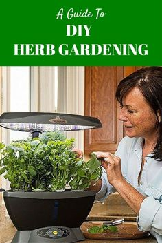 A Guide to DIY Herb