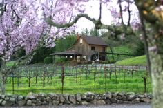 Mill Creek Winery in NE Sonoma Valley California...I just have to go there...wow!