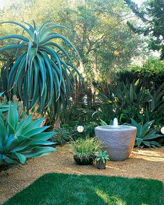 Garden Tour: Small-Scale Garden Clearly Delineated  In the front courtyard, gravel gives border plants room to spill; sculptural Aloe thraskii and Agave attenuata define the rear.    Read more at Marthastewart.com: 11 Garden Tours