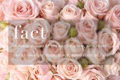 pink rose meaning Flower Words, Flower Names, Flower Quotes, Happy Flowers, Colorful Flowers, Pink Flowers, Rose Color Meanings, Flower Meanings, Hot Pink Roses