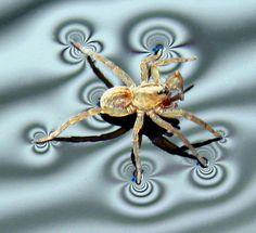 Spider by Robert Adams on Capture My Vermont