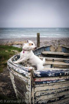 Jack Russell...come sail away  https://www.pinterest.com/pin/AY2LRTbKNAx_pjubH7IZgiSyl8idDLU82MztQjqep45DuFLvbLxH-Xs/