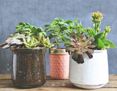POTTED SUCCULENTS FOR MOTHER'S DAY | My Fabuless Life