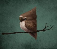 Little Bird by ~adailey