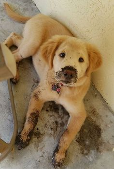 Hear me out though.... it was a really fun mud puddle! . #dogs #dogoftheday #ilovemydog #puppy #lovedogs #servicedog #petlovers #doglovers #dog #puppylover #pets #servicedogs #funnydogs