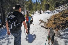 Tails on trails - Herald and News: Email Blast