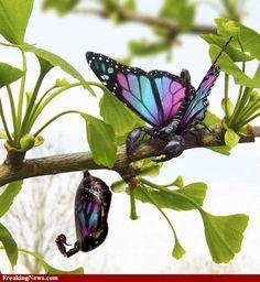 butterflies pictures | Butterflies Pictures - Strange Pics - Freaking News
