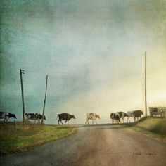 It's Five O'Clock Somewhere -by jamie heiden via Flickr