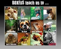 Every PERSON could learn at least one of these lessons from our Boxers!! Boxer Mom, Boxer And Baby, I Love Dogs, Puppy Love, Cute Dogs, Animals Beautiful, Cute Animals, Baby Animals, Funny Animals