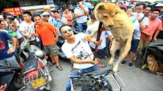 End the Yulin Dog Eating Festival for Good https://www.change.org/p/this-is-no-festival-so-lets-put-an-end-to-this-madness