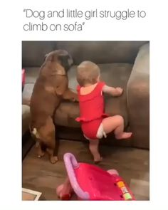 The short chubby struggle is real Cute Baby Videos, Cute Animal Videos, Funny Animal Memes, Funny Animal Videos, Cute Funny Animals, Funny Animal Pictures, Cute Baby Animals, Pet Videos, Videos Funny