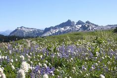 Meadow Magic by jchants, via Flickr - our Yosemite backpacking guides love this scene http://SierraSpirit.biz/