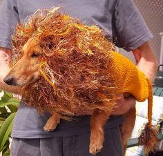 Dog lion Coat