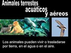 Resultado de imagen para animales que pueden vivir en el agua y en la tierra