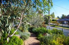 Garden in Montrose, Vic - Phillip Johnson Landscapes