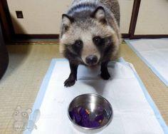 Chibi_tori shares a lot of photos of Tanu eating.