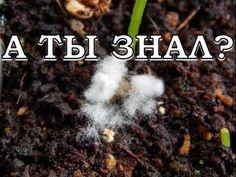 Плесень на грунте с рассадой - почему, что делать, меры профилактики - YouTube