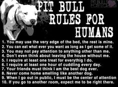 Pitbulls i love this is so true but they love you way more then you deserve.. my dog is so spoiled my step dad went right back into taco bell just to get our pit bull a taco lmao