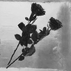 Never Lasting Tango  #burningcold #glissando #flowersintheice #heartbeat #midair #glacier #coldhands