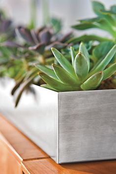 Steel Centerpiece Planters - Planters - Accessories - Room & Board