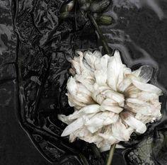 Photographer Ullamaija Hänninen: Musta Daalia (The Black Dahlia)