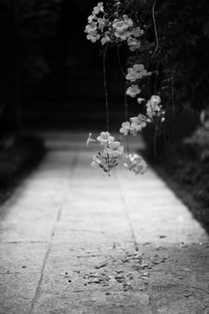 Black and White Photography Nature