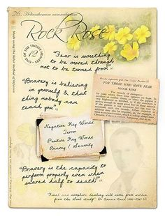 Rock RoSe Bach Flower Remedy for Inner Turmoil and Stress Stock Bottles Anxiety Treatment, Depression Treatment, Deal With Anxiety, Stress And Anxiety, Herbs For Depression, Elixir Floral, Bach Flowers, Rock Rose, Massage Benefits