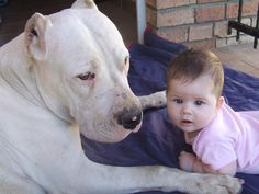 my daugther and our dogo  www.delacosadogos.hu