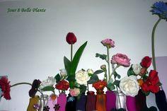 8.02.0216 fleurs domestiques... Flow, Flowers
