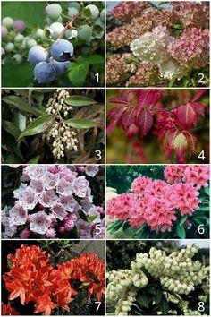 Garden Gates, Beautiful Flowers, Flora, Fruit, Plants, Dom, Lawn And Garden, Yard Gates, Plant