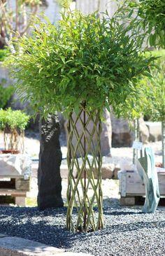 Stačí odřezat vrbové proutí, zapíchnout do květináče a zaplést: Vydržte pár týdnů a vznikne Vám úžasná dekorace! | Prima Living Willow, Living Fence, Bougainvillea, Willow Tree, Hedges, Basket Weaving, Bird Feeders, Architecture, Garden Design