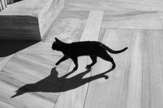 Wild black cat walking on a marble floor. Shadow is nice. Black Cat Superstition, Watercolor Cat, Warrior Cats, Cat Walk, Pretty Cats, Cat Breeds, Cat Love, Pet Care, Animals And Pets